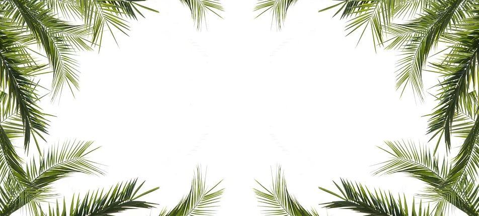 palmový motiv